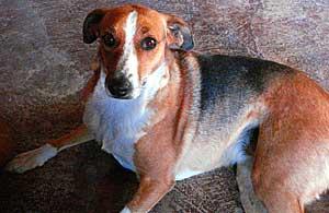 """""""Mataré un perro por cada día"""", asegura Zhu Guangbing en su blog."""