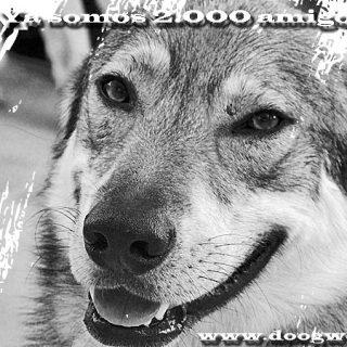 Doogweb en Facebook ¡Ya somos 2.000!