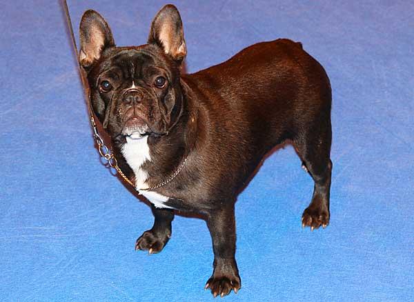 Huella nasal, tatuaje, biometría, microchip... Pros y contras de los diferentes métodos de identificación canina empleados a lo largo de la Historia.