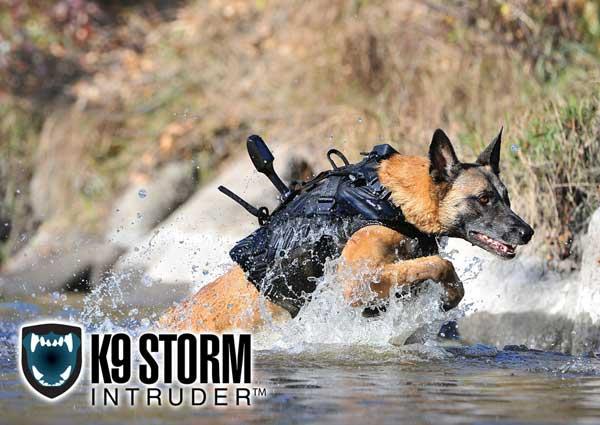 """Es posible e incluso probable que """"Cairo"""" portara el último modelo de chaleco para perros militares, denominado """"Storm Intruder""""."""