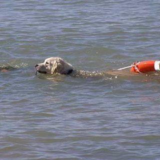 Próximo entrenamiento del Grupo de Rescate Mare Nostrum, el domingo 22 de mayo (10,30 a 18,30 horas) en Santa Pola (Alicante).