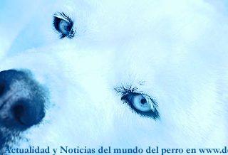 Noticias del mundo del perro, 9 a 15 de mayo en www.doogweb.es.