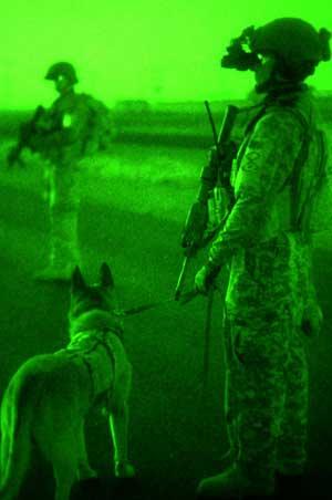 Perros militares para operaciones especiales.