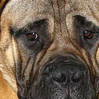 Apuntes prácticos sobre la ansiedad por separación en perros.