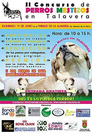II Concurso de perros mestizos en Talavera con Protectora Asha.