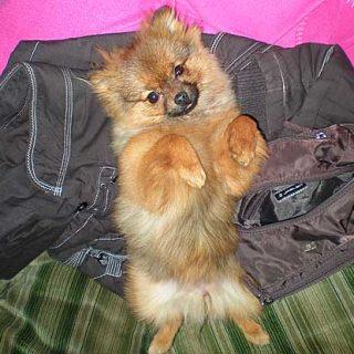 Cómo identificar la hiperactividad canina.
