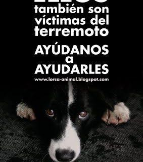 Los perros del terremoto de Lorca.