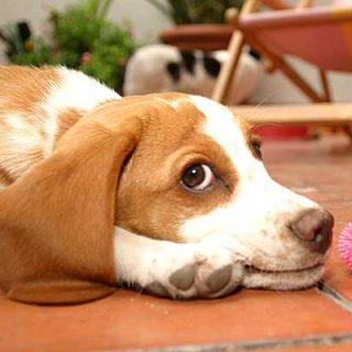 Fundación Affinity recomienda unas pautas básicas para los propietarios con animales de compañía que sufren ansiedad a causa de los petardos.