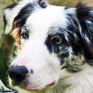 Señales, entorno y experiencias en el aprendizaje del perro.
