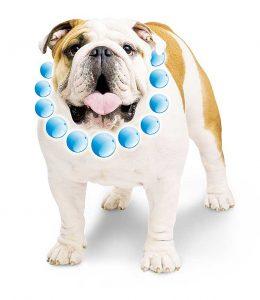 Nuevo pienso para bulldog, de Advance.