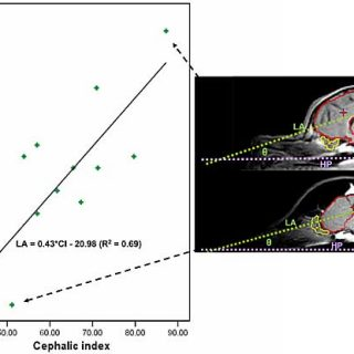 Braquicéfalos: Rotación y reorganización del cerebro de los perros.