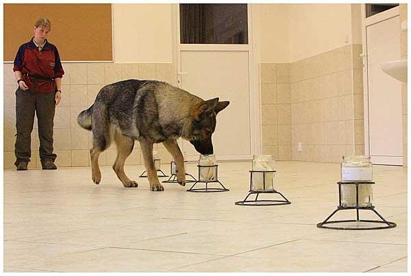 El olfato del perro puede distinguir gemelos idénticos.