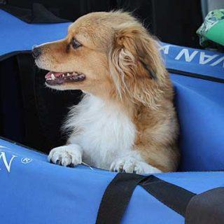 10 Consejos para viajar con perros.