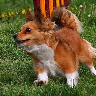 Cinco Pruebas de Agility RSCE en 9 días y el mejor ambiente de deporte con perros en Cantabria.