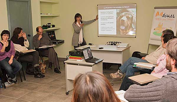 Askal, cursos de perros señal.