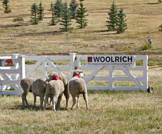 Vídeos de pastoreo con perros... diferentes.