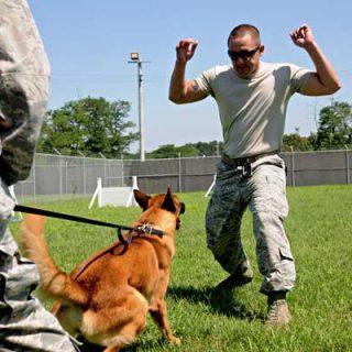 Base aérea de Kunsan, Corea, así viven y se adiestran los perros militares de las unidades especiales K-9.