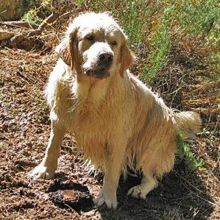 Test de ADN para identificar razas caninas.