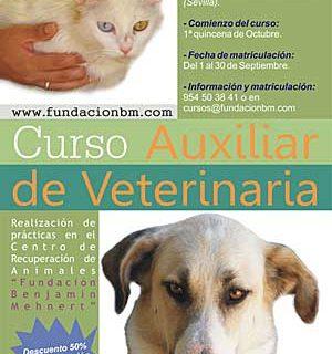 Curso de Auxiliar Veterinario con la Fundación Benjamín Mehnert de recuperación de galgos maltratados.