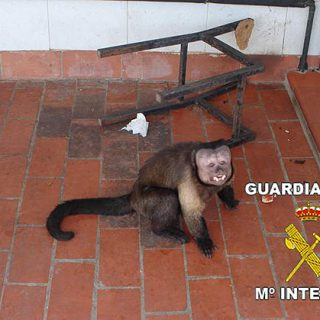 Tráfico de especies protegidas y zoos ilegales.