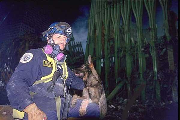 Los perros de rescate del 11-S y su salud.
