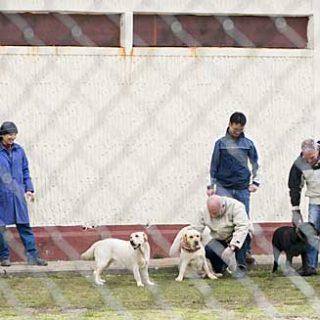 Perros de terapia de la Fundación Affinity en prisiones.