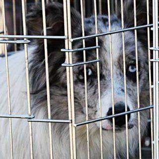 A partir del 1 de enero próximo, desaparece la cuarentena de seis meses todavía vigente, y viajar al Reino Unido con perros (también con gatos y hurones) será mucho más sencillo.