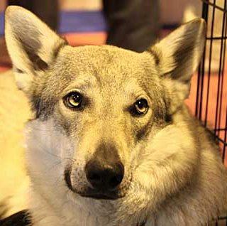 VII Salón para la Adopción de Animales de Compañía en el Parque de El Retiro de Madrid, días 30 de septiembre, 1 y 2 de octubre.