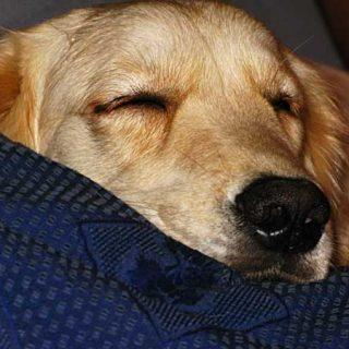 Hostelbookers nos propone su Top 10 de alojamientos seleccionados por su calidad y buen precio, para viajar con perros por todo el mundo.