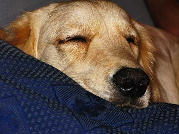 Hostelbookers nos propone su Top 10 de alojamientos seleccionados por su calidad y buen precio,  para <strong>viajar con perros</strong> por todo el mundo.
