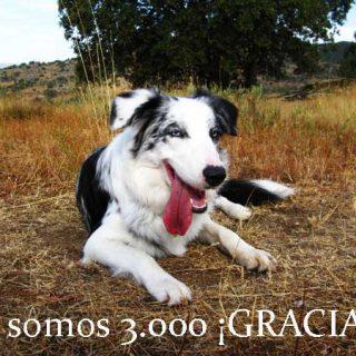 Ya somos tres mil en la página de doogweb en Facebook. Tres mil apasionados de los perros siempre al día de todo lo que sucede en el mundo del perro. ¡Gracias por seguirnos!