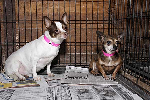 Los perros rescatados de granjas de cachorros sufren daños psicológicos graves de larga duración.