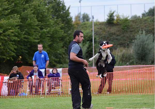 Se ha celebrado en la bonita localidad de Boom (Bélgica) una nueva edición del Campeonato de Europa de Disc Dog