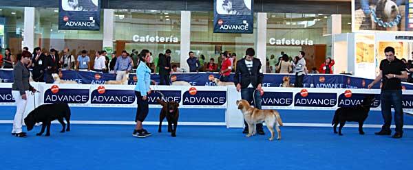 80 Exposición Canina Internacional de Barcelona (Martorell).