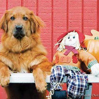 Recomendaciones de la AVMA y Animal League para familias con perros ante la fiesta de Halloween.