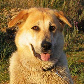 """Muchos perros """"inadaptados"""" son en realidad joyas en bruto. Perros que necesitan un trabajo que realizar en el que focalizar todos esos ¿problemas de comportamiento?"""