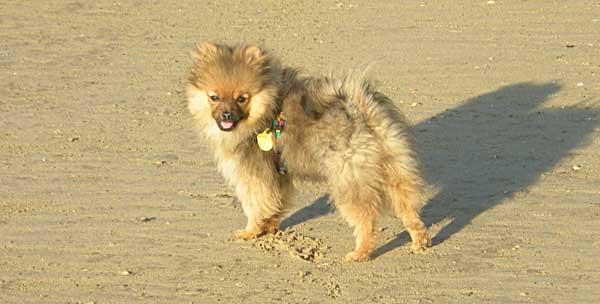 Actualización en la comprensión, detección y manejo del estrés canino, con Gary Landsberg, Jon Bowen y Jaume Fatjo.