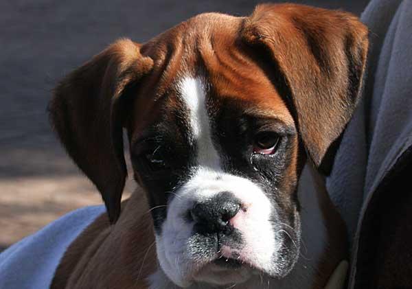 El miedo en perros y propietarios.