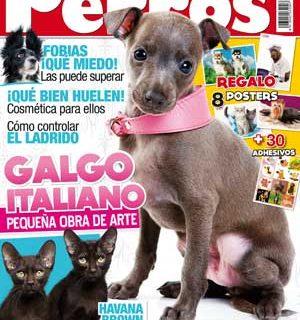 El número de noviembre de la revista Perros y Compañía tiene como raza principal a un pequeño lebrel, el galgo italiano.