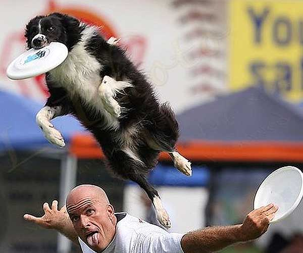 AED, Asociación Española de DogFrisbee.