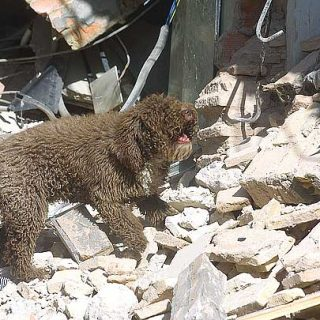 Delegación de la Universidad de Buenos Aires constató oficialmente que el Método Arcón es el sistema que logra optimizar la eficacia en los Perros de Salvamento.