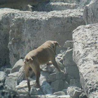 Un total de 5 personas sepultadas por deslizamiento en Manizales salvaron sus vidas al ser localizadas por Equipos Caninos Método Arcón de la Defensa Civil Colombiana.