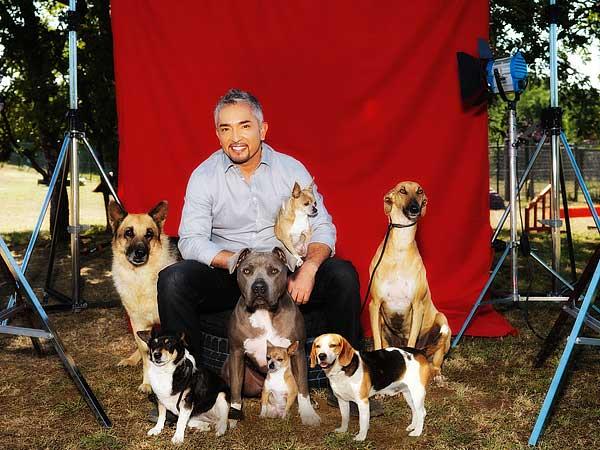 """En """"El líder de la manada"""", César Millán trabajará con perros abandonados, ayudando a las familias adoptivas en todo el proceso (elección del perro apropiado, incorporación al nuevo hogar, adaptación y educación)..."""