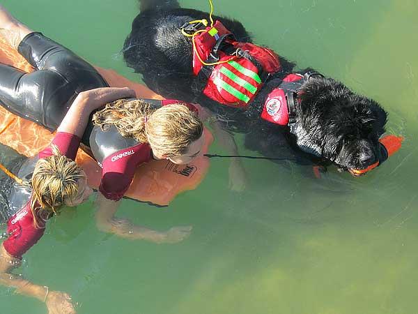 Curso de rescate canino en agua con el Grupo de Rescate Mare Nostrum en colaboración con el Club Español Del Terranova CETR, y la Escuela Canina De La Federación De Asociaciones Para El Fomento y Conservación De Las Razas Caninas Puras.
