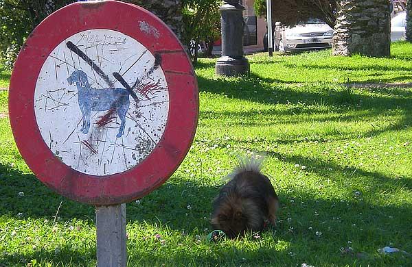El Ayuntamiento de Salamanca pone en marcha dos cursos gratuitos teórico prácticos de educación canina.