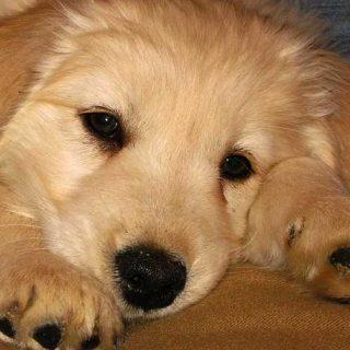 ¿Estamos preparados para incorporar un perro a casa? ¿Sabemos elegir el perro adecuado a nuestras propias necesidades y características? Por Mónica Corchado.