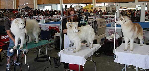 Exposición Canina Internacional de Vizcaya, 12 y 13 de noviembre de 2011.