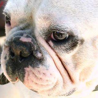 Flores de Bach y envejecimiento cerebral canino. Un caso práctico para ayudar al perro mayor.