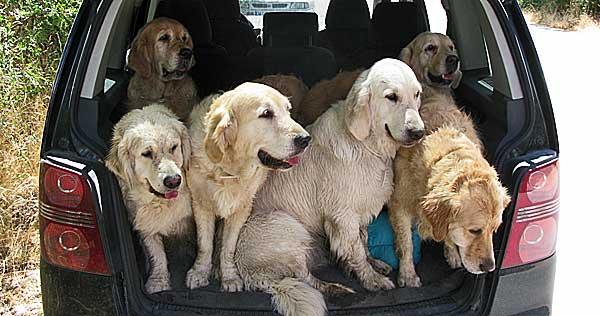 Por primera vez en España, Helen Phillips impartirá un curso de dos días de Lifeskills (habilidades caninas para la vida diaria).
