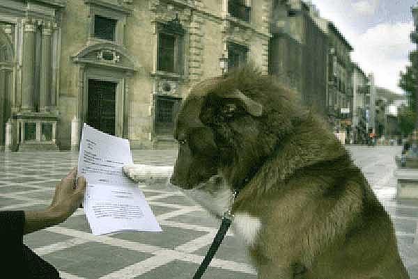 La Audiencia Provincial de Granada condena por maltrato a policía local por disparar perro.